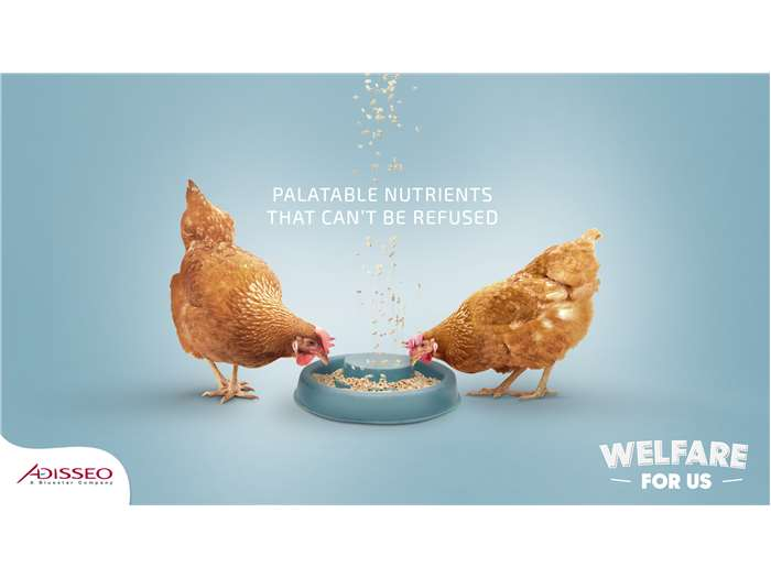 Welfare for us